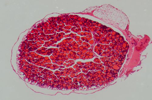 histology example image
